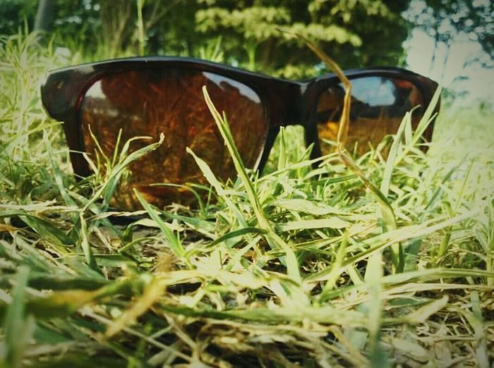 Grass Greenery No People Nature Outdoors Day Close-up Sunglasses Plastic Frame Instagood Eyeem Market Ground Level View Followme
