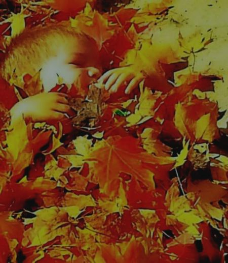Perspectives On Nature Autumn Orange Color Leaf Outdoors Beauty In Nature Maple Leaf Buried Alive In Fall Leaves Nature Grandson Growing Up Too Fast November Making Memories! :)
