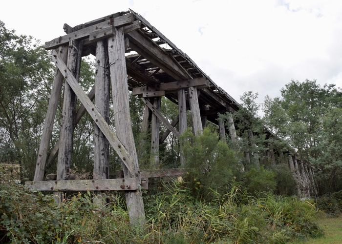 Abandoned Architecture Bridge Bridge - Man Made Structure Built Structure Connection Damaged Day Deterioration Field Forest Land Nature No People Obsolete Old Outdoors Plant Ruined Run-down Sky Tree Trestle Trestle Bridge Wood - Material