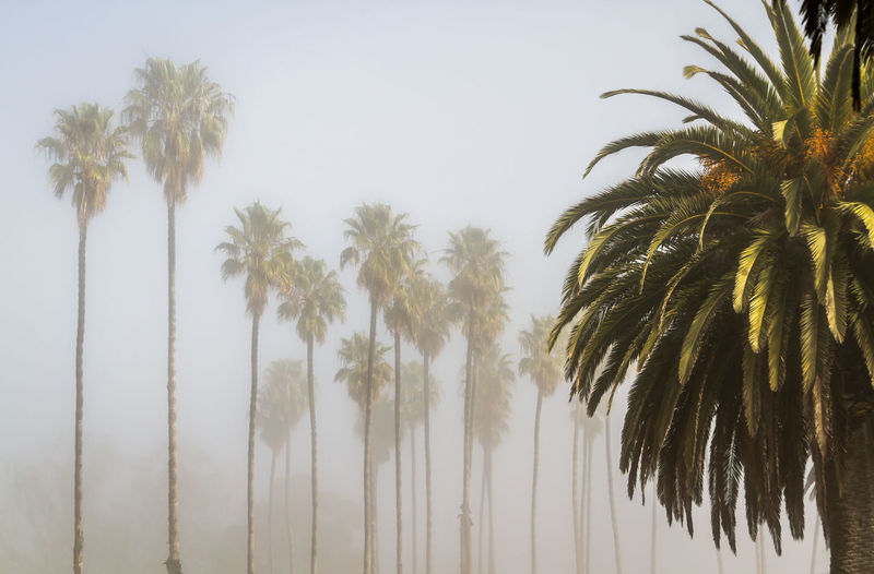 Palm trees in the fog at Refugio State park in California California Green Misty Palms Refugio State Park Santa Barbara, CA Travel USA Beauty In Nature Day Fog Foggy Growth Low Angle View Many Nature No People Old Outdoors Palm Tree Palm Trees Scenics Sky Travel Destinations Tree