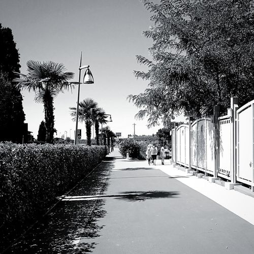 Italy Summer Exploratorium Visual Creativity People Architecture Walking Around Photographer EyeEmNewHere Tree Shadow Sky Pixelated Empty Road Palm Tree vanishing point The Way Forward Diminishing Perspective Calm Country Road Treelined Road Marking Palm Leaf