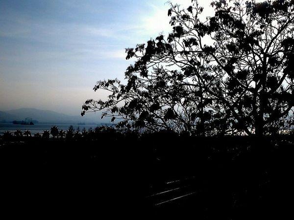 #AWAY FROM SEA #below Railway #Mountain #nice #Shadow #trees #TURKEY/Kocaeli