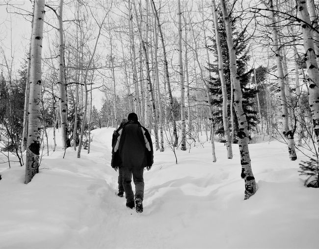 Winter Hike, Steamboat Springs Winter Snow Cold Temperature Rear View Nature Weather Adventure Beauty In Nature Real People Hiking Tree Full Length Forest Day Warm Clothing Outdoors People Adult Steamboat Springs