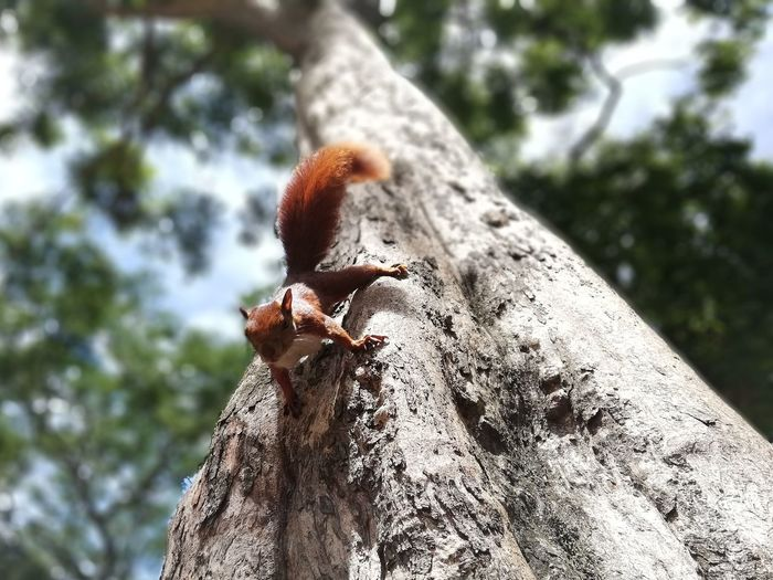 Squirrel Squirrel #squirrelcloseup Tree Tree Trunk Perching Forest Close-up Sky
