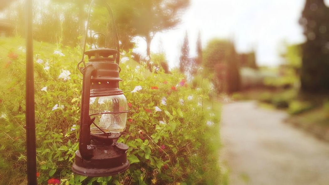 Outdoors Day Tree Flower No PeopleBeauty In Nature Landscape Green Color Light Beautiful Lamp Nature Close-up Blur Flares In Nature Background