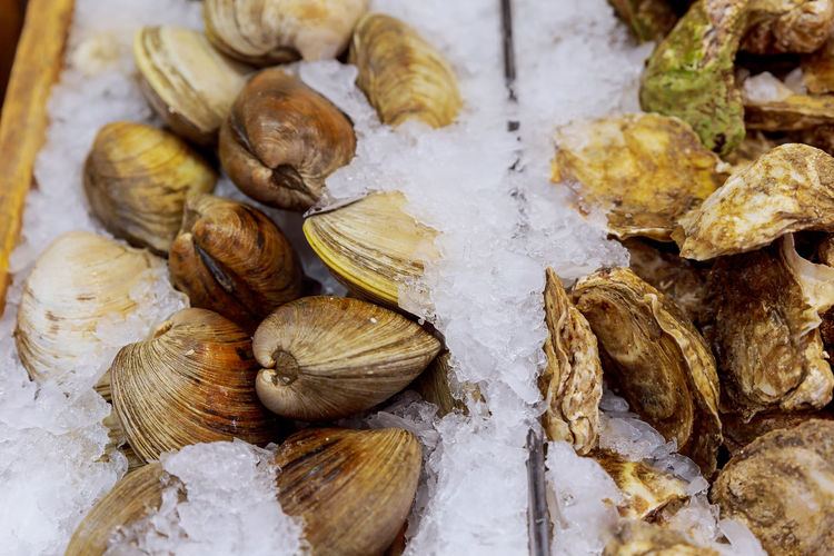Close-up of seafood with ice for sale