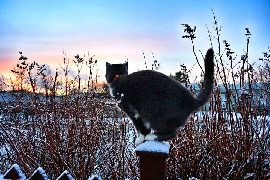 Decemberphotoaday Frosted Floweer Frosty Morning Sunny Morning December Morning DECEMBER2015 Taking Photos Taking Photos Beautiful Cold Day Mycat