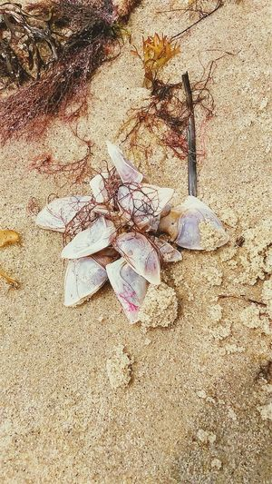 Cool Finds Beachphotography Living Things High Tide