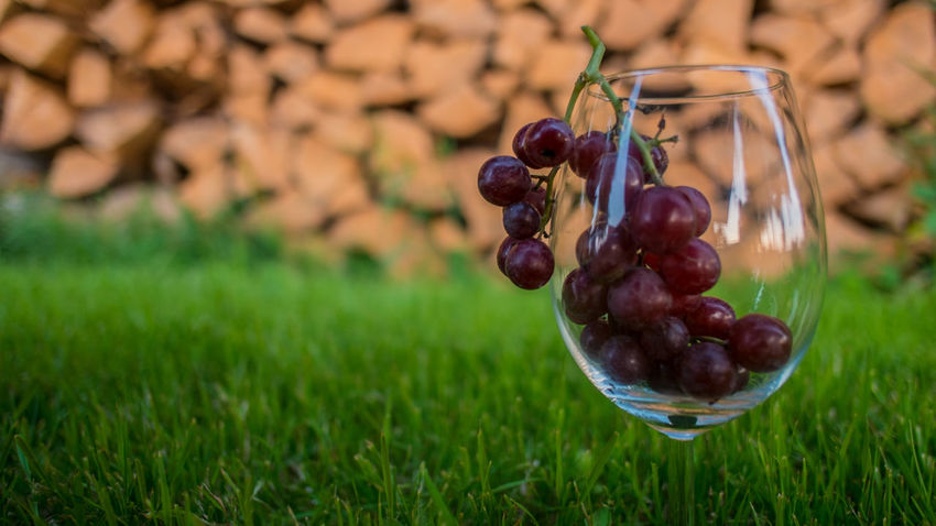 Beauty In Nature Close-up Day Focus On Foreground Food Food And Drink Freshness Fruit Grass Green Color Growth Healthy Eating Nature No People Outdoors Plant Wine Not EyeEmNewHere