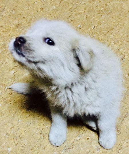 Dog White