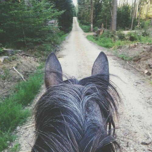 My Little Pony Pony Pferd Best Horse I Love You