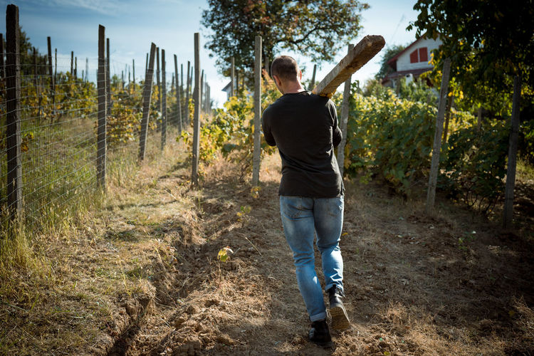 Working hard on a beautiful autumn day One Person Full Length Tree Forest Plant Casual Clothing Land Standing Leisure Activity Day Rear View Nature Young Adult Adult Outdoors Pole Cement Work Working Working Hard Vine Vineyard Carrying Heavy Lifting Worker