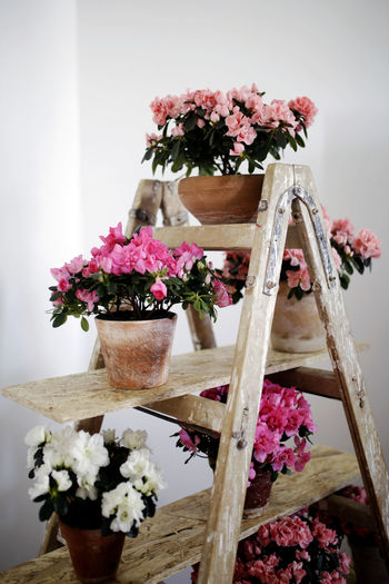Freshness Pink Plant Bouquet Bouquet Of Flowers Decoration Desing Flower Home Interior Inspiration