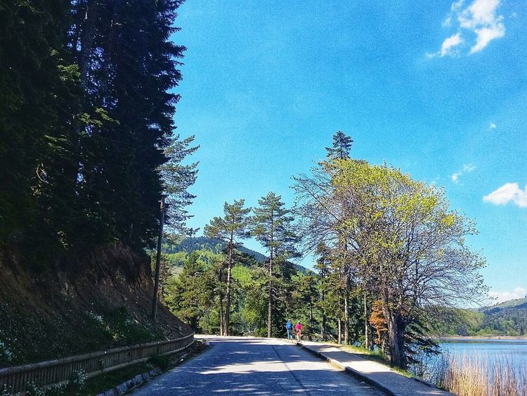 Abant Turkey Bolu TURKEY Bolu  Bolu..TURKEY Beauty In Nature Lake Blue Tree Road Women Sky Architecture Walkway Treelined White Line The Way Forward Pathway Woods Paved Long Roadways