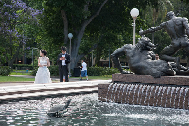 SYDNEY,NSW,AUSTRALIA-NOVEMBER 20,2016: Archibald Memorial Fountain with bride and groom at Hyde Park in Sydney, Australia. Archibald Fountain ArtWork Couple Disconnected Flowing Water Fountain Greek Groom Mobile Phone Statue Sydney, Australia Theseus Tourist Wedding Bride Classical Formalwear Hyde Park Marriage  Minotaur Park Real People Roman Sculpture Water
