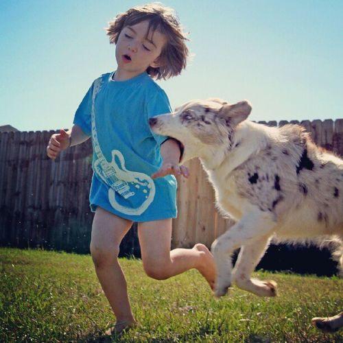 Got him! #aussieplay Adorable DogLove Aussie Ilovemydog Mansbestfriend Petstagram Dogoftheday Dogsofinstagram Eyes Dogstagram Pets Picpets Dog Instadog Animal Mybestfriend Dogs Australianshepherd Pet Instapup Cute Aussieplay Puppy Instagramdogs
