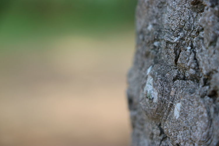Bark Old Tree