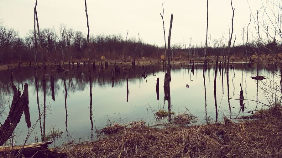 Nature Swamp First Eyeem Photo