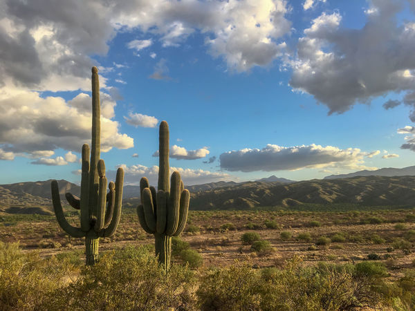 Two Saguaros. Arizona Desert Sonoran Desert Arid Climate Beauty In Nature Blue Sky Cactus Cloud - Sky Golden Hour Landscape Nature No People Outdoors Public Land Saguaro Scenics - Nature Sky Tranquil Scene Tranquility Wallpaper
