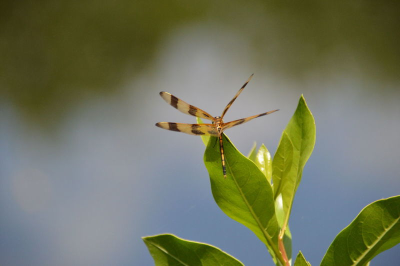 View of dragonfly at the edge of leaf