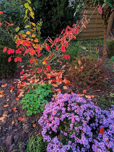 Herbst 2016 Ferien2016 Germany🇩🇪 Beauty In Nature Outdoors Nature Sonne No People Schönes Weter Mega😍❤ Wasser Sonnenuntergang 🌇 Cool Fresh Nice Krass Schöne Aussicht 😍 Bäume Tree Sunset Flowerpower Bäume Outdoors Tree Herbst🍁