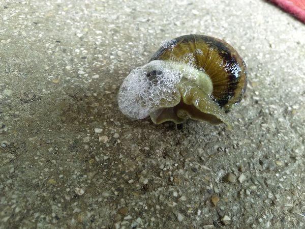 Sea Life Sand Close-up Arthropod Antenna Invertebrate