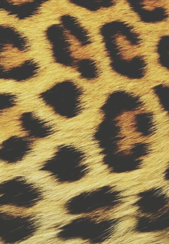 Love Inlove Lovethis Spotted Animaliers Coverpic Faboulous