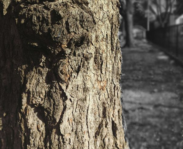 Day Outdoors Textured  No People Rough Close-up Tree Trunk Tree Nature