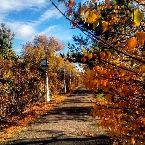 Хотя у нас в Астане и нормальная осень была🍁 Местами очень даже красивая🍁🍃🍂 _____________________________________ Kazakhstan Astana Казахстан Астана AdelyaSAN деревьялюбие