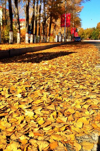 Autumn Leaf Light And Shadow Outdoors Tree Fallen