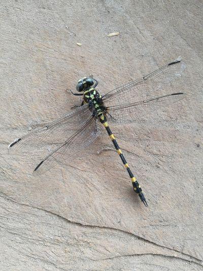 Dragonfly Beach