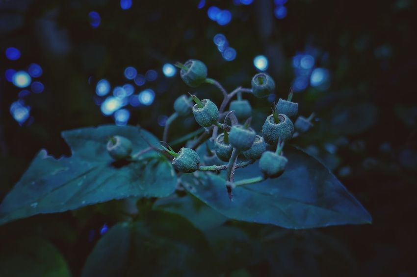 Color Palette Blue Night Faded Nature On Your Doorstep Nature Beauty Check This Out From My Point Of View Outdoor Photography Summertime Nature Taking Photos Nature Photography