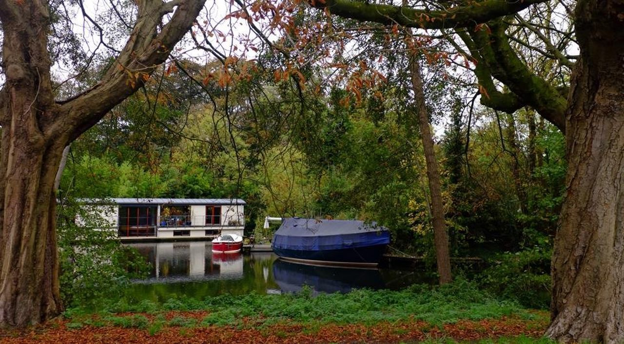 tree, transportation, mode of transport, forest, branch, outdoors, nautical vessel, growth, nature, day, houseboat, no people, tree trunk, scenics, beauty in nature, sky