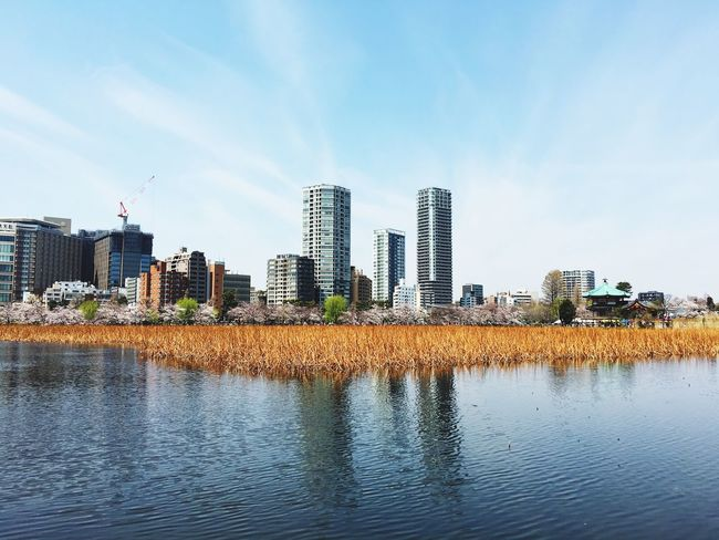 Architecture City Building Exterior Built Structure Skyscraper Water Urban Skyline Cityscape Modern Sky Growth Waterfront Outdoors Tower River Tree No People Day Nature Downtown District