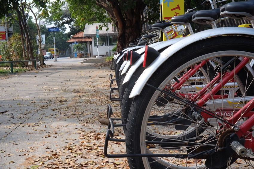 bike parking Transportation Mode Of Transport Land Vehicle Bicycle Wheel Stationary Tree Parking No People Outdoors Day Spoke Tire