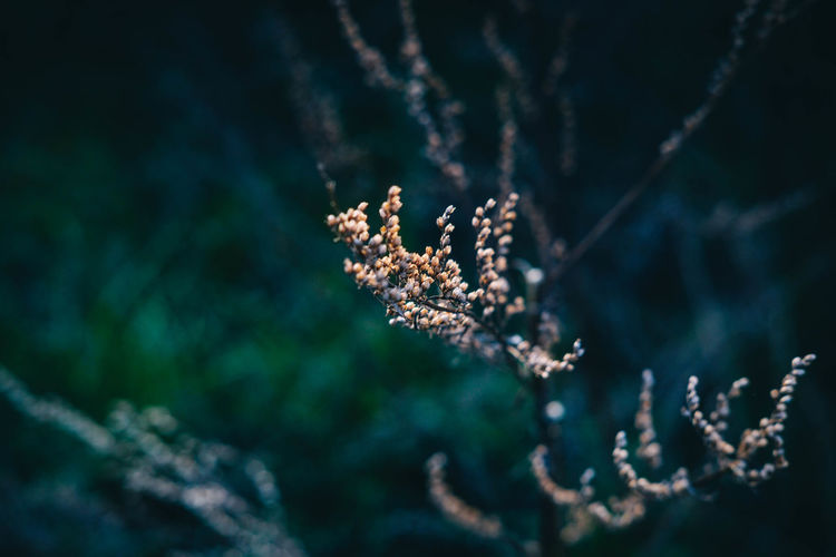 Autumn Bokeh Darkness And Light Depressive Forest Leaf Moody Nature Out Of Focus Outdoors Seeds Twig Vanitas Winter Woods Xf35mmf2 Beauty In Nature