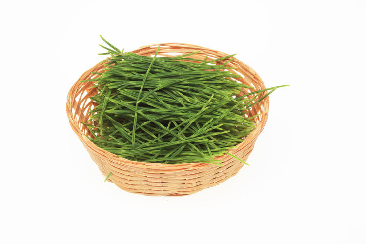 medicinal plant common horsetail, Equisetum arvense, field horsetail Equisetum Arvense Herb Horsetail Basket Close-up Common Horsetail Container Copy Space Cut Out Directly Above Food Food And Drink Freshness Green Color Healthy Eating Indoors  Medicinal Plant Nature No People Plant Still Life Studio Shot Wellbeing White Background Wicker