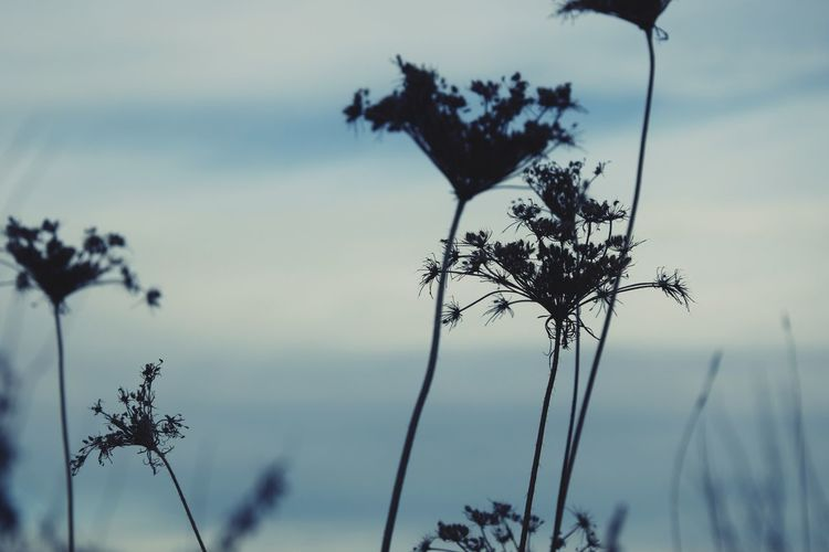 Low Angle Shot Low Angle View Silhouette Dry Grass Sky Background Outdoors Close Up Photography Focus On Foreground Blury Background Beauty In Nature Nature_collection Nature Photography