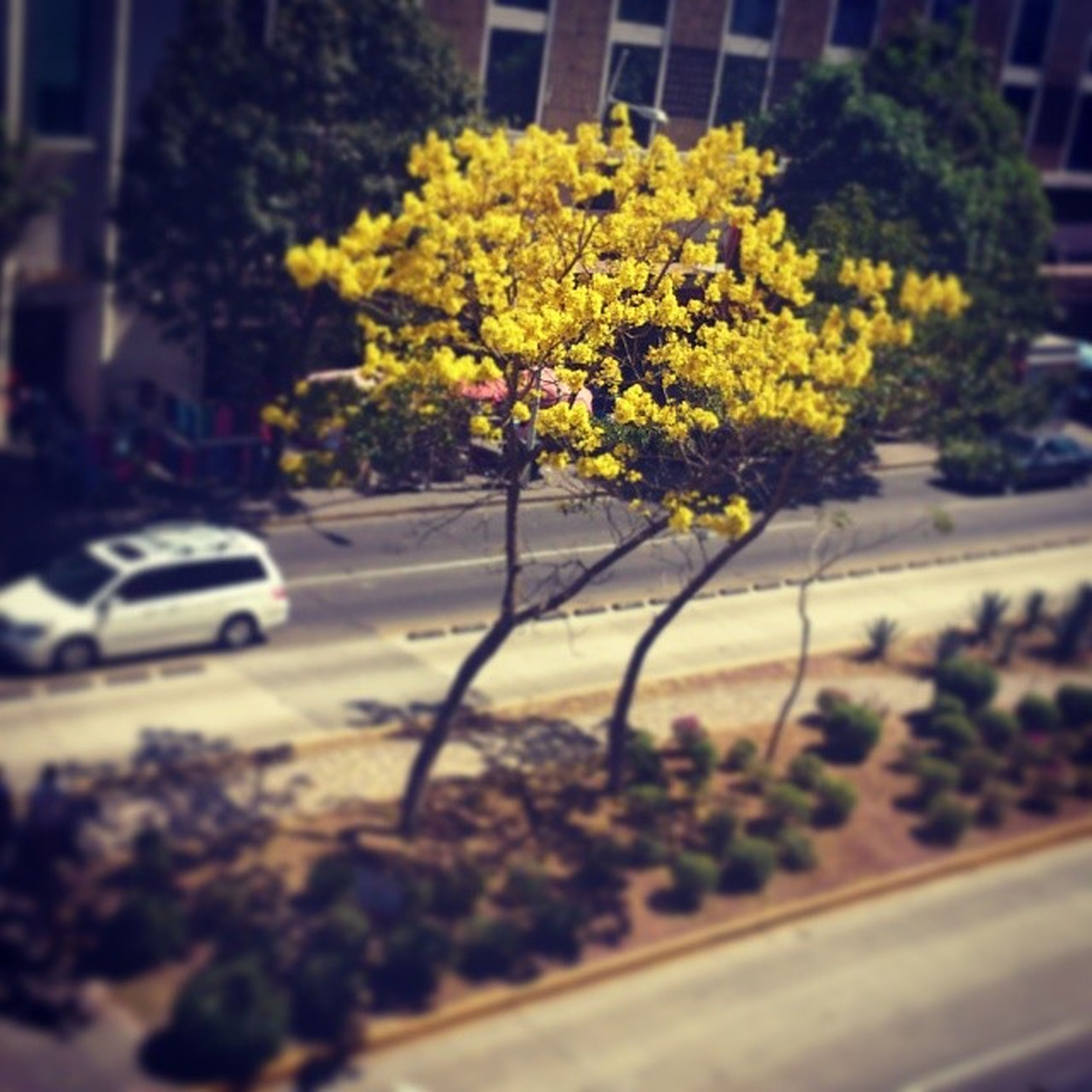 transportation, land vehicle, flower, mode of transport, car, yellow, focus on foreground, street, growth, road, tree, plant, selective focus, building exterior, nature, fragility, outdoors, day, close-up, freshness