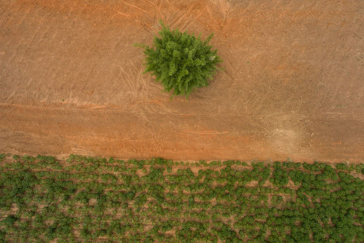 Aerial view ; Rows of soil before planting Cassava farm pattern in a plowed field prepared Plant Landscape Nature Environment Land Tree No People Agriculture Day Field Growth Scenics - Nature Green Color Outdoors Rural Scene Farm Grass Beauty In Nature Aerial View Crop  Arid Climate