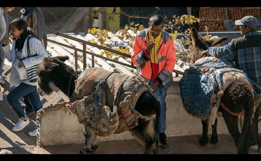Morocco Animal Travel Moroccan Style Donkeys Donkey Time Donkey Photography Moulayidresszarhon Meknès Trip Bolibilis