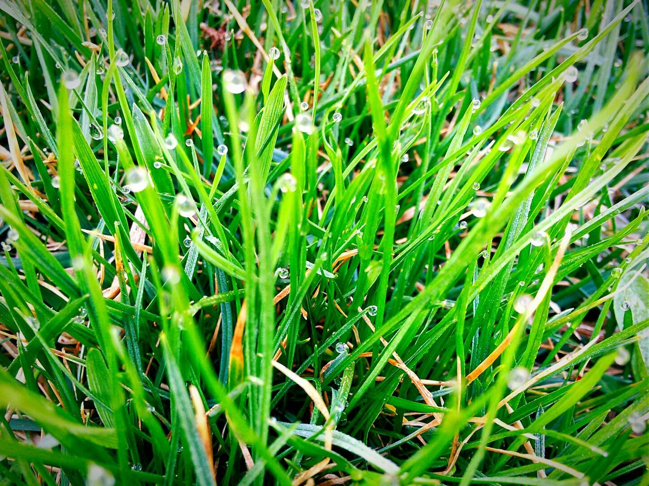green color, grass, growth, nature, field, plant, day, outdoors, beauty in nature, no people, backgrounds, close-up, freshness