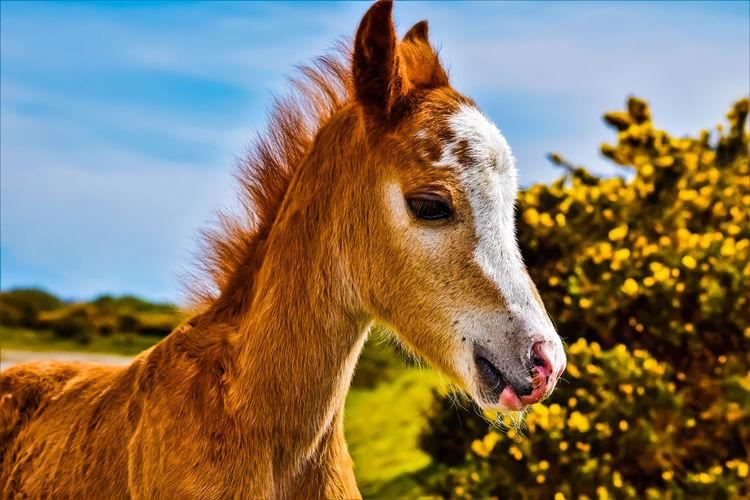 Up Close & Personal Animal Animal Head  Animal Nose Animal Themes Close-up Horse Livestock One Animal Pony Wild Animal Wild Pony
