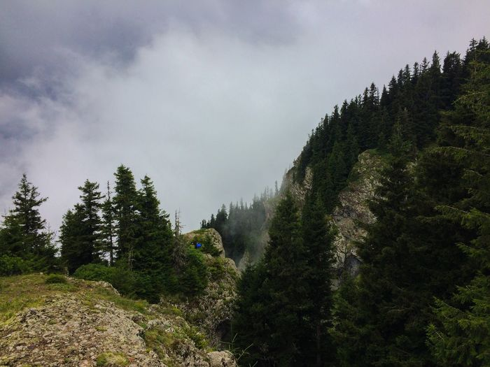 Fog Foggy Tree Plant Sky Cloud - Sky Nature Growth Beauty In Nature No People Land Scenics - Nature Tranquility Forest Day Tranquil Scene Mountain Coniferous Tree Outdoors Green Color Non-urban Scene Environment