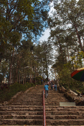 Low angle view of people walking on footpath in forest