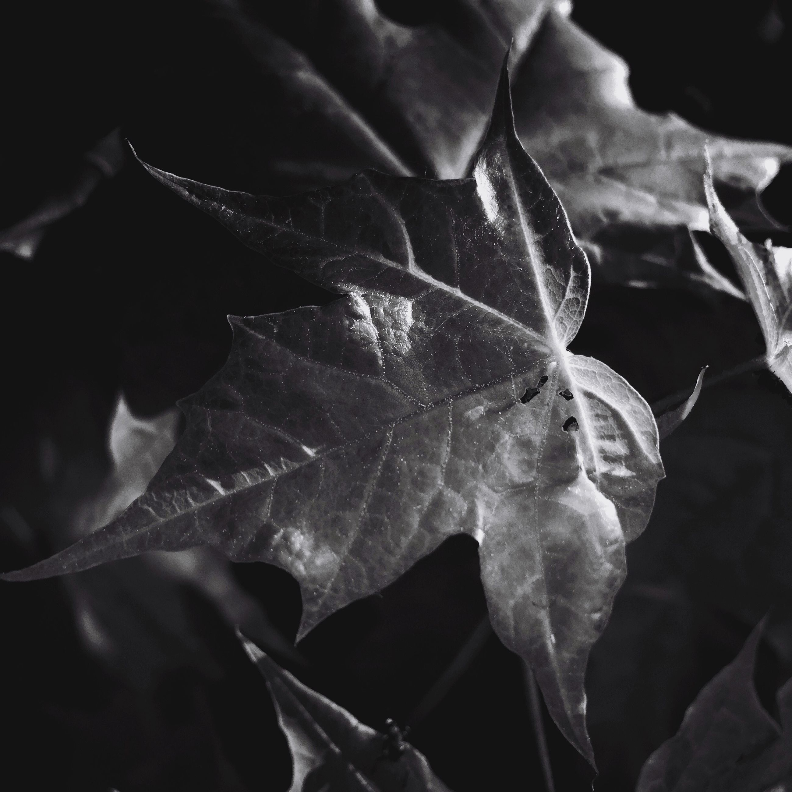 leaf, close-up, fragility, leaf vein, nature, beauty in nature, growth, drop, plant, natural pattern, freshness, focus on foreground, wet, water, outdoors, petal, leaves, no people, season, flower
