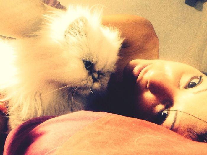 Ilovemycat Catlover Hugme