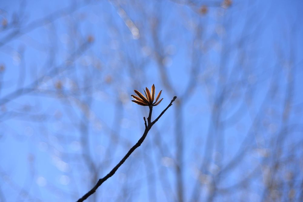 Survivor Flower Fragility Nature Beauty In Nature Growth Branch No People Petal Freshness Close-up Day Flower Head Springtime Outdoors Blooming Tree Sky