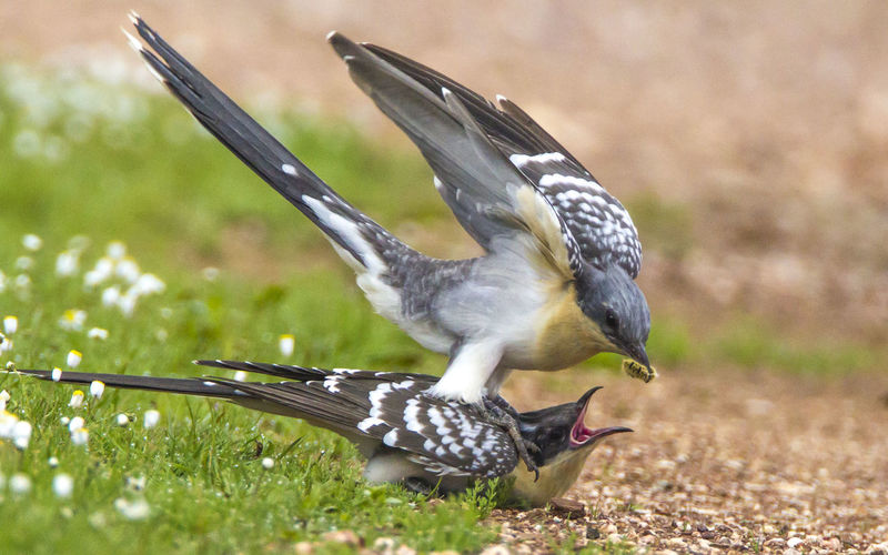 Side view of birds fighting for prey