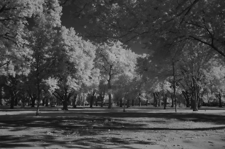 Fujifilm XT1 Fujinon XF 10-24mm f/4 OIS 720nm Infrared Filter - Visual Journal June 2017 Fairbury, Nebraska At The Park Camera Work Check This Out Experimental Photography EyeEm Best Shots EyeEm Best Shots - Infrared Fine Art Photography FUJIFILM X-T1 Fujinon 10-24mm F4 Ghostly Infrared Infrared Photography Infrared Radiation Ir Filter Ir Photography Monochrome Monochrome Photography Near Infrared Spectrum Park - Man Made Space Photo Diary Photography Robert W. Wood Treescollection Visual Journal Wide Angle